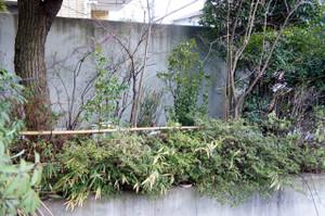 Plantsofyama