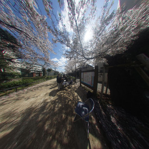 Sakura_cnv